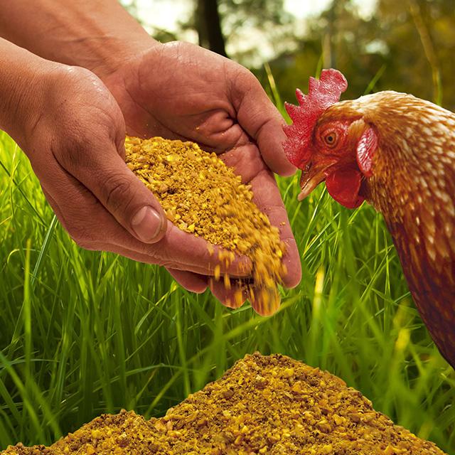 expertos en avicultura 03 - Piensos Bograo